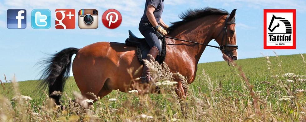 Follow Tattini Riding