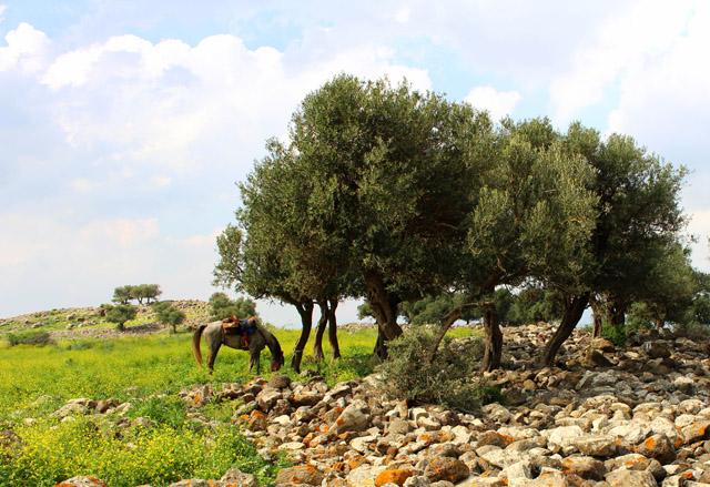 Lovastúra Izraelben
