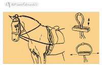 Training Elastic Reins