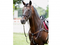 Tattini Breastplate With Martingale 5 Points Elastic Eco