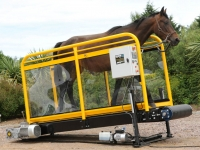 Treadmill For Horses
