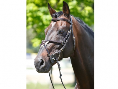 Tattini Headstall Crossed Patent Eco Rubber Reins