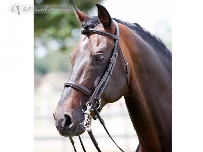 Tattini Bridle Curb/snaffle Shaped Raised Eco Double Reins