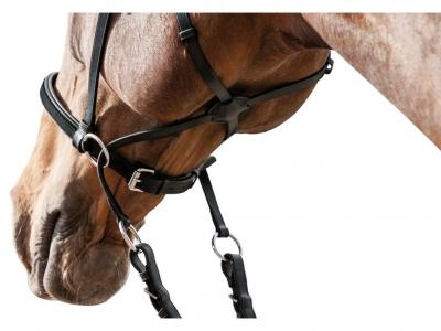 Frau Horse Frieds Fara Zabala