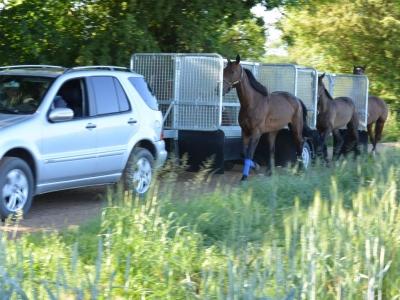 Vontatható Jártató Összeszerelve Hippocenter (2/4 Lóhoz)