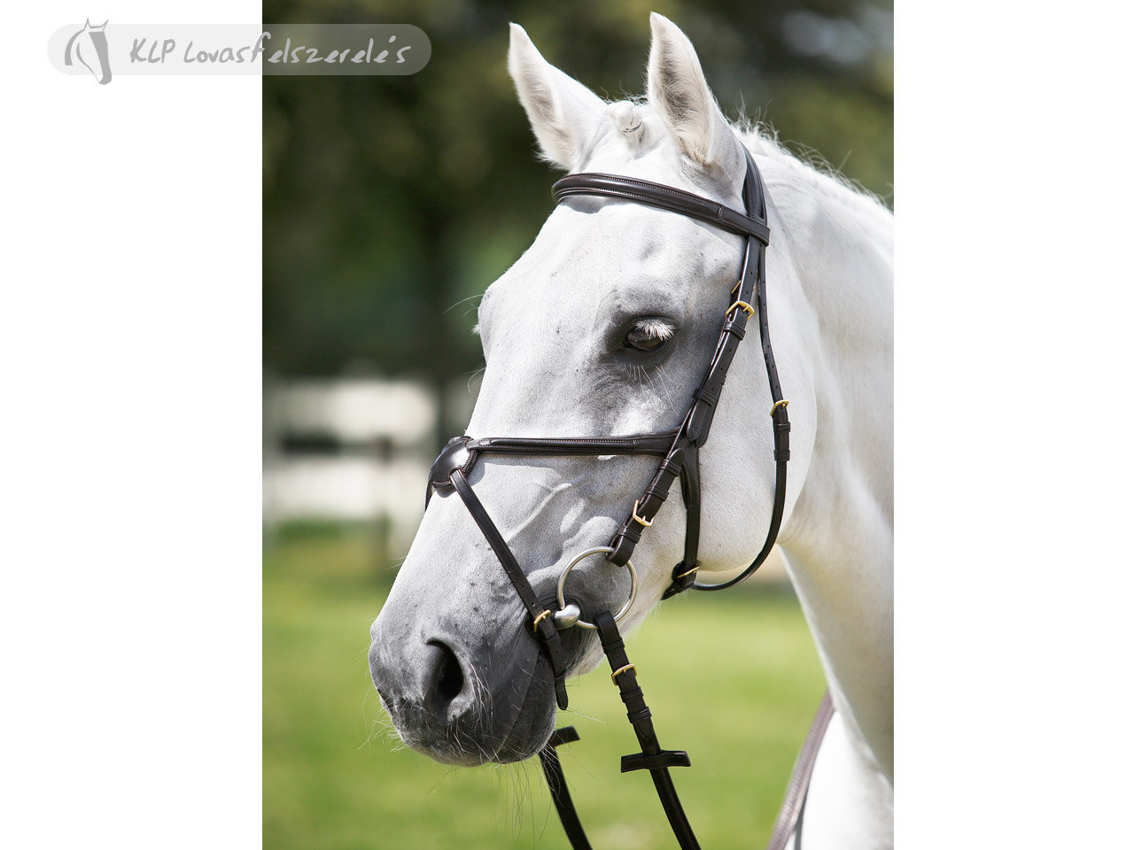 Tattini Headstall Crossed Raised Eco Rubber Reins