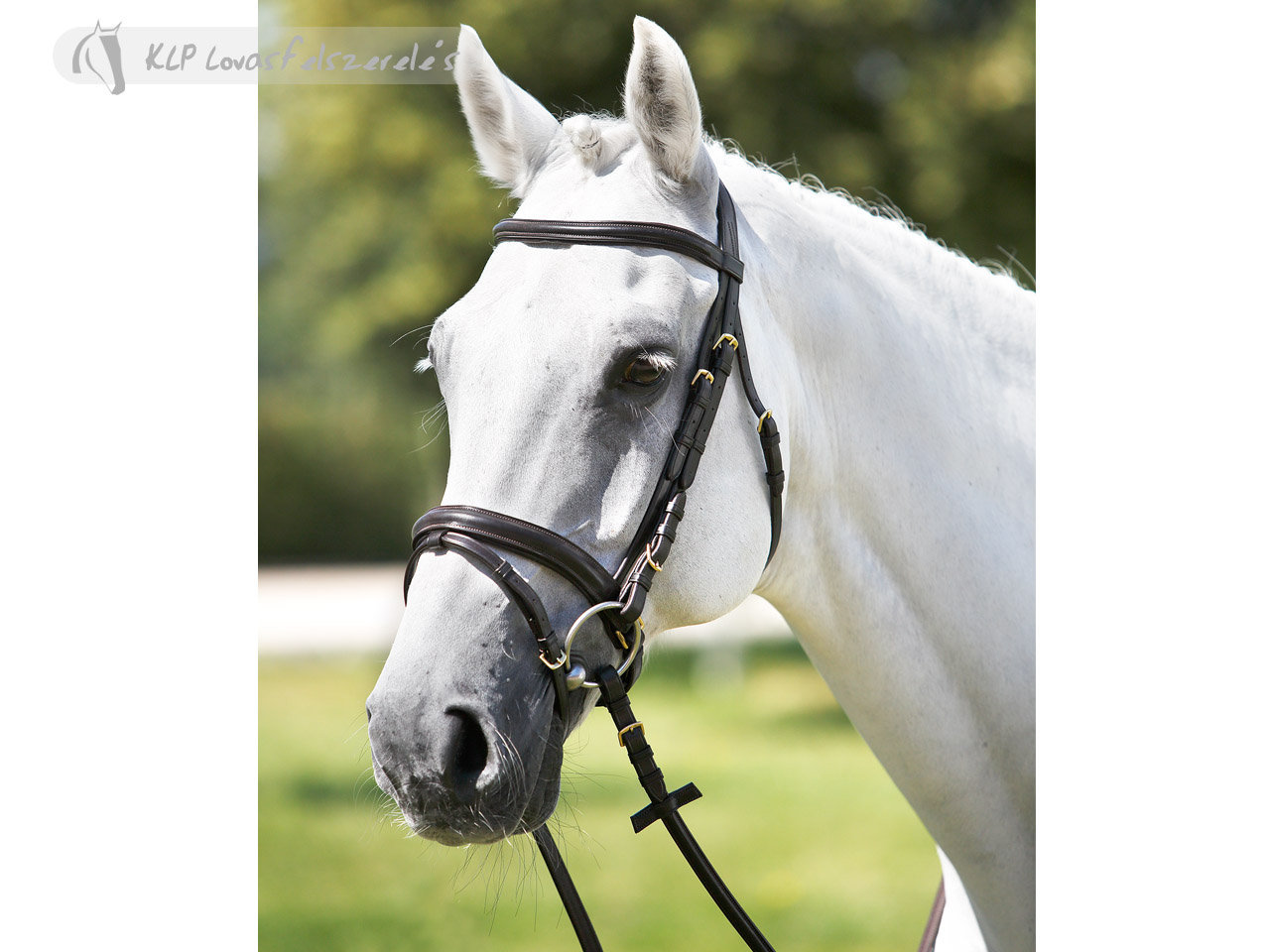 Tattini Headstall Shaped Padded Eco Rubber Reins