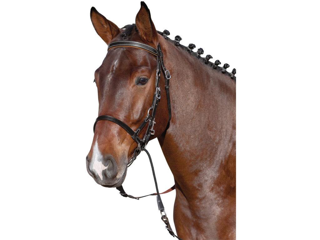 Kantár Zabla Nélkül Plus Horse Friends