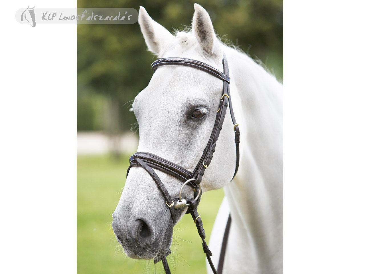 Daslo Snaffle Bridle Padded Patent Leather