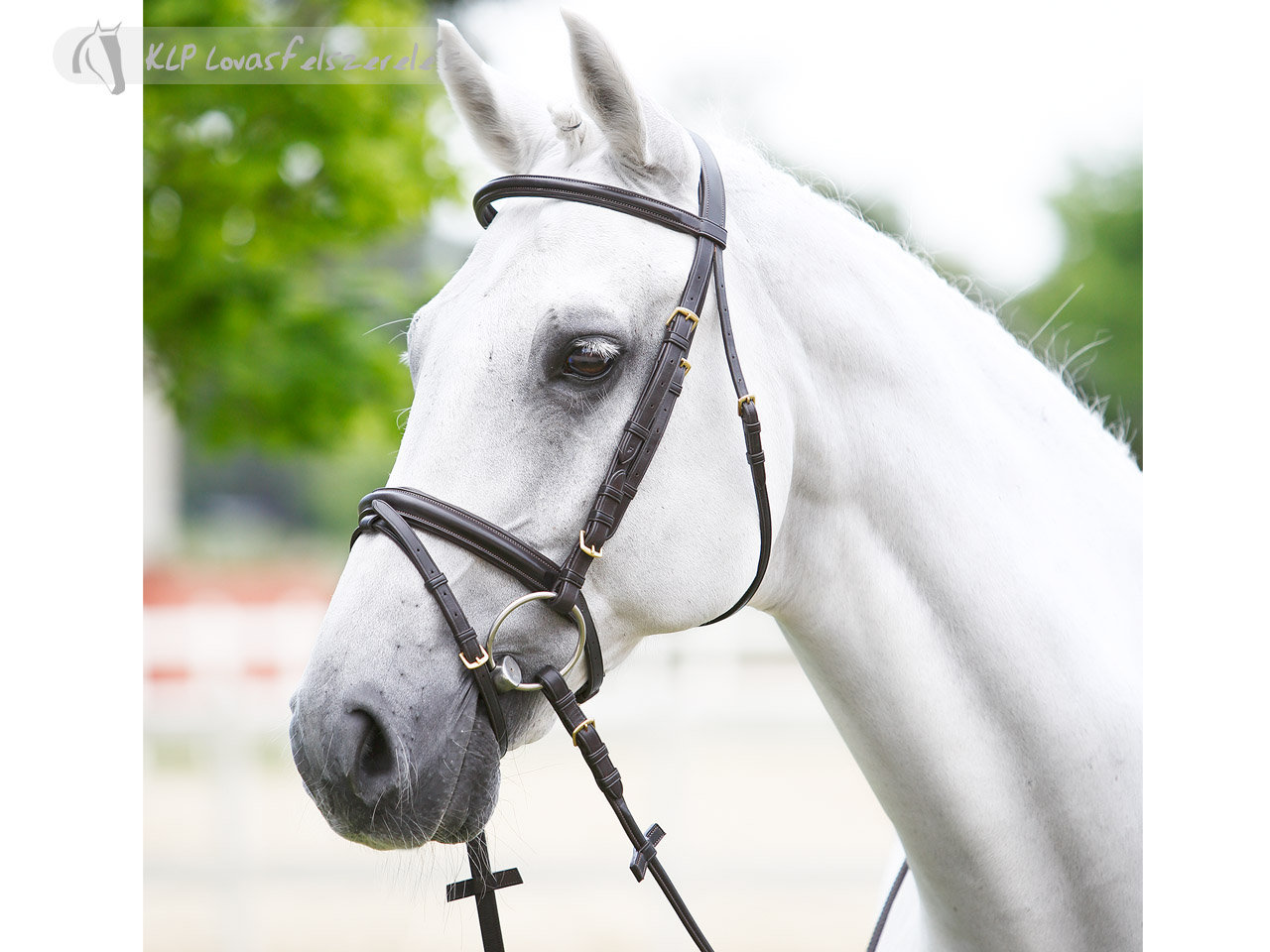 Daslo Bridle Shaped With Rubber Reins
